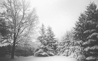 Trees on Michigan Property